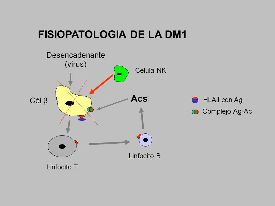 FISIOPATOLOGIA DE LA DM1 Desencadenante (virus) Cél β Linfocito T Linfocito B Acs Célula NK Complejo Ag-Ac HLAll con Ag