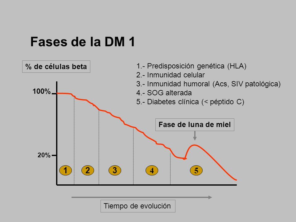 Fases de la DM 1 123 45 1.- Predisposición genética (HLA) 2.- Inmunidad celular 3.- Inmunidad humoral (Acs, SIV patológica) 4.- SOG alterada 5.- Diabe