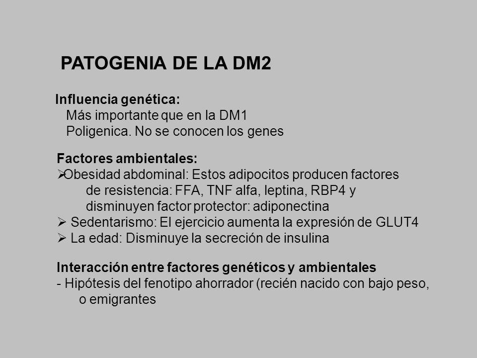 PATOGENIA DE LA DM2 Factores ambientales: Obesidad abdominal: Estos adipocitos producen factores de resistencia: FFA, TNF alfa, leptina, RBP4 y dismin