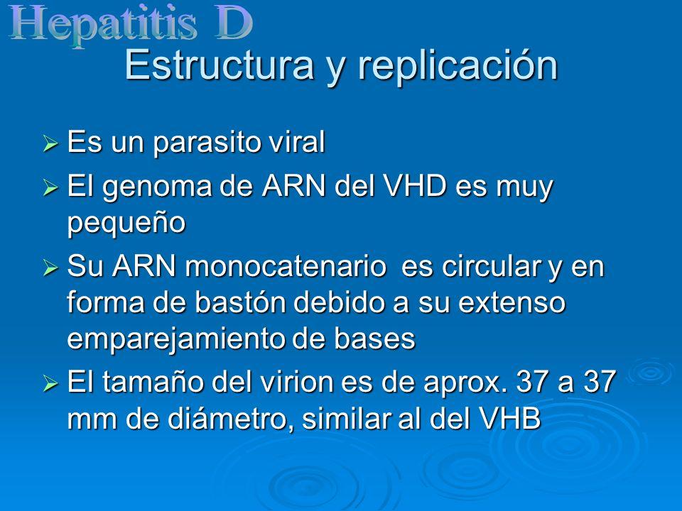 Estructura y replicación Es el único miembro de la familia hepaciviridae, de la familia flaviridae Es el único miembro de la familia hepaciviridae, de la familia flaviridae Tiene un diámetro de 30 a 60 nm con un genoma de ARN de sentido positivo, y tiene envoltura Tiene un diámetro de 30 a 60 nm con un genoma de ARN de sentido positivo, y tiene envoltura El genoma del VHC codifica 10 proteínas, incluidas dos glucoproteinas (E1,E2), que van variando durante la infección El genoma del VHC codifica 10 proteínas, incluidas dos glucoproteinas (E1,E2), que van variando durante la infección El VHC solamente infecta a los humanos y a lo chimpancés El VHC solamente infecta a los humanos y a lo chimpancés