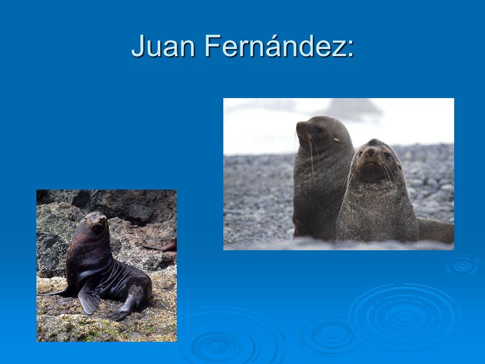 Juan Fernández: