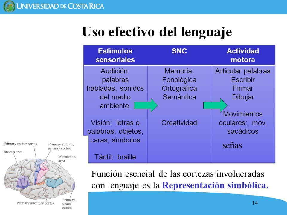 14 Uso efectivo del lenguaje Función esencial de las cortezas involucradas con lenguaje es la Representación simbólica. señas