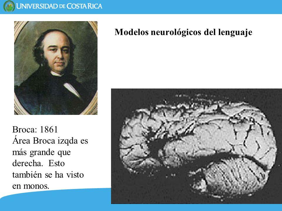 15 Modelos neurológicos del lenguaje Broca: 1861 Área Broca izqda es más grande que derecha. Esto también se ha visto en monos.