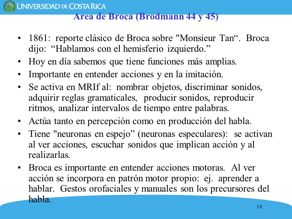 16 Area de Broca (Brodmann 44 y 45) 1861: reporte clásico de Broca sobre