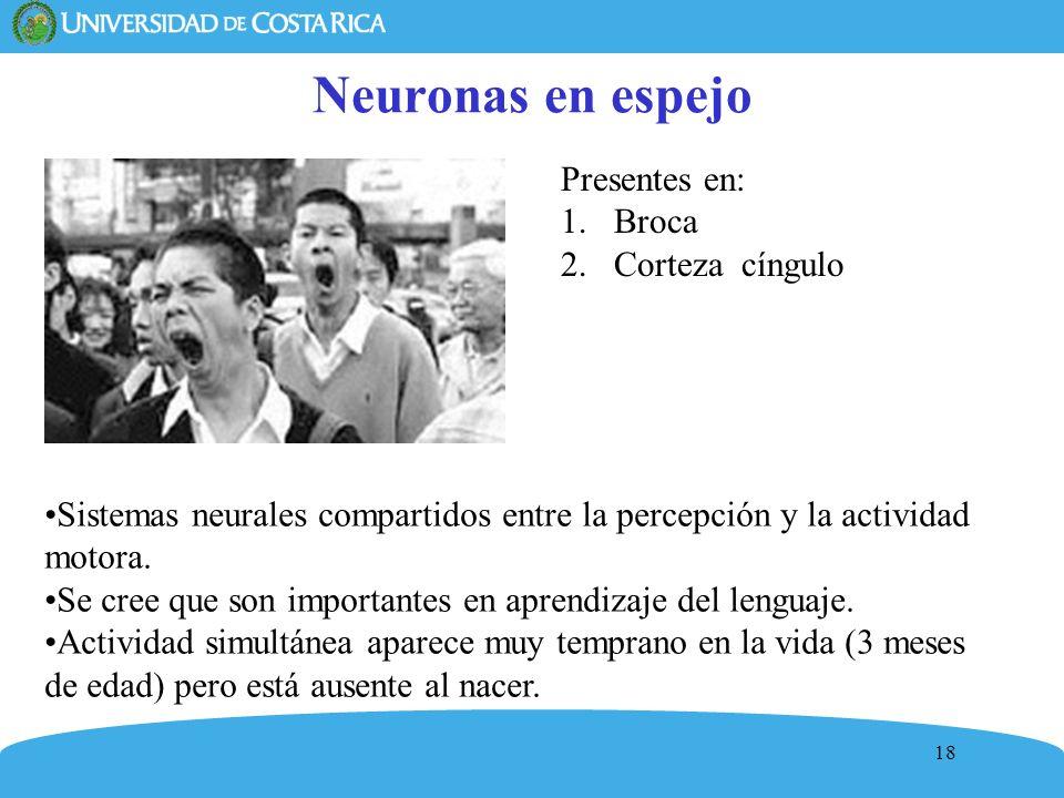 18 Neuronas en espejo Presentes en: 1.Broca 2.Corteza cíngulo Sistemas neurales compartidos entre la percepción y la actividad motora. Se cree que son