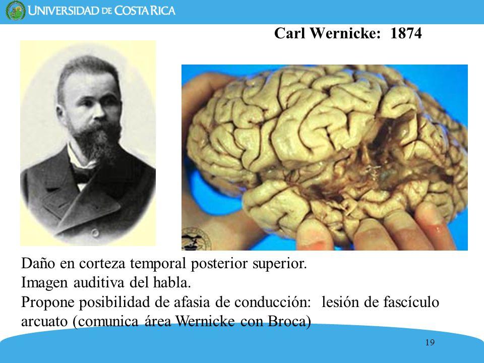 19 Carl Wernicke: 1874 Daño en corteza temporal posterior superior. Imagen auditiva del habla. Propone posibilidad de afasia de conducción: lesión de