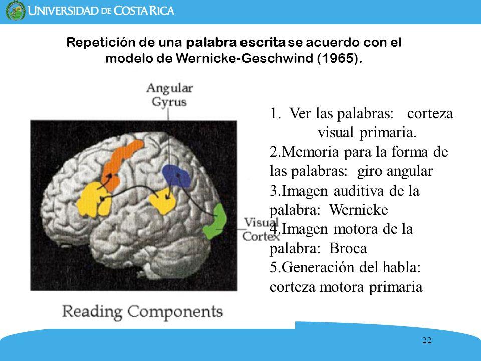 22 Repetición de una palabra escrita se acuerdo con el modelo de Wernicke-Geschwind (1965). 1. Ver las palabras: corteza visual primaria. 2.Memoria pa