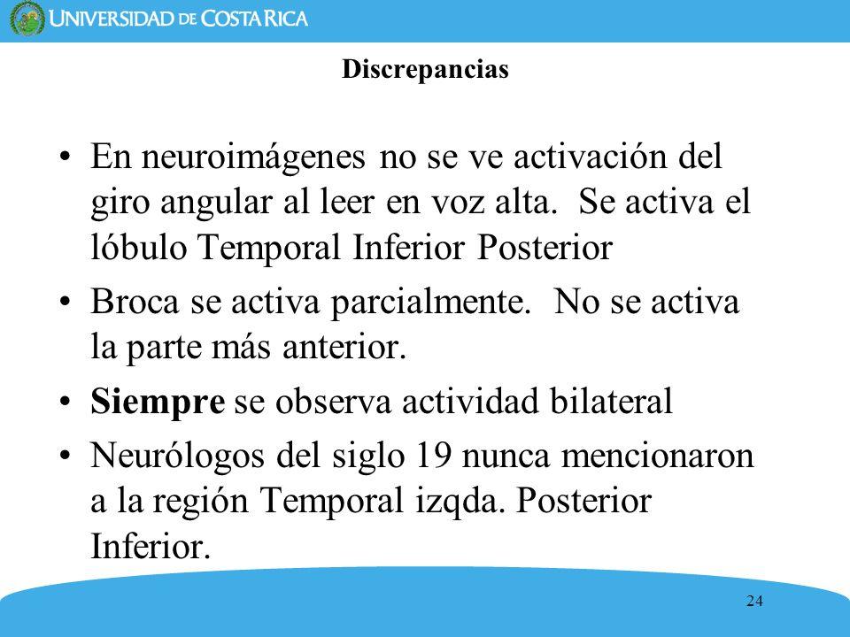 24 Discrepancias En neuroimágenes no se ve activación del giro angular al leer en voz alta. Se activa el lóbulo Temporal Inferior Posterior Broca se a
