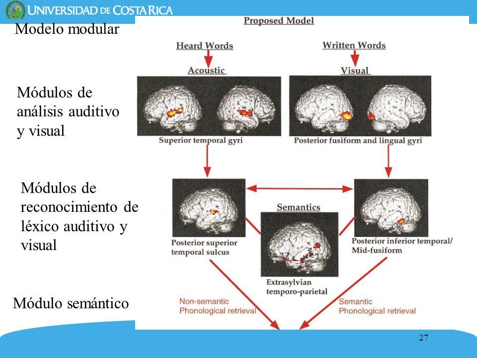 27 Modelo modular Módulos de análisis auditivo y visual Módulos de reconocimiento de léxico auditivo y visual Módulo semántico