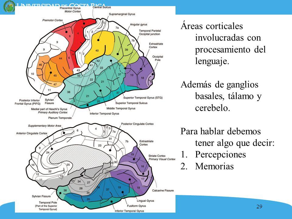 29 Áreas corticales involucradas con procesamiento del lenguaje. Además de ganglios basales, tálamo y cerebelo. Para hablar debemos tener algo que dec