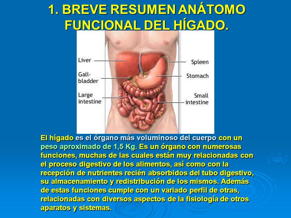 El hígado es el órgano más voluminoso del cuerpo con un peso aproximado de 1,5 Kg. Es un órgano con numerosas funciones, muchas de las cuales están mu