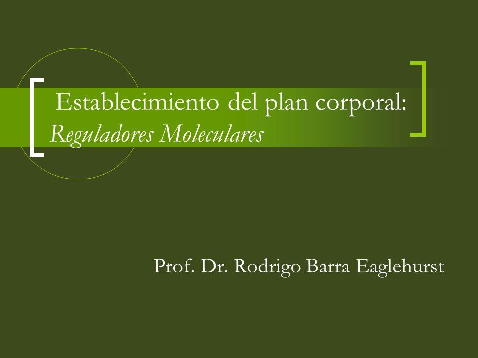 Establecimiento del plan corporal: Reguladores Moleculares Prof. Dr. Rodrigo Barra Eaglehurst