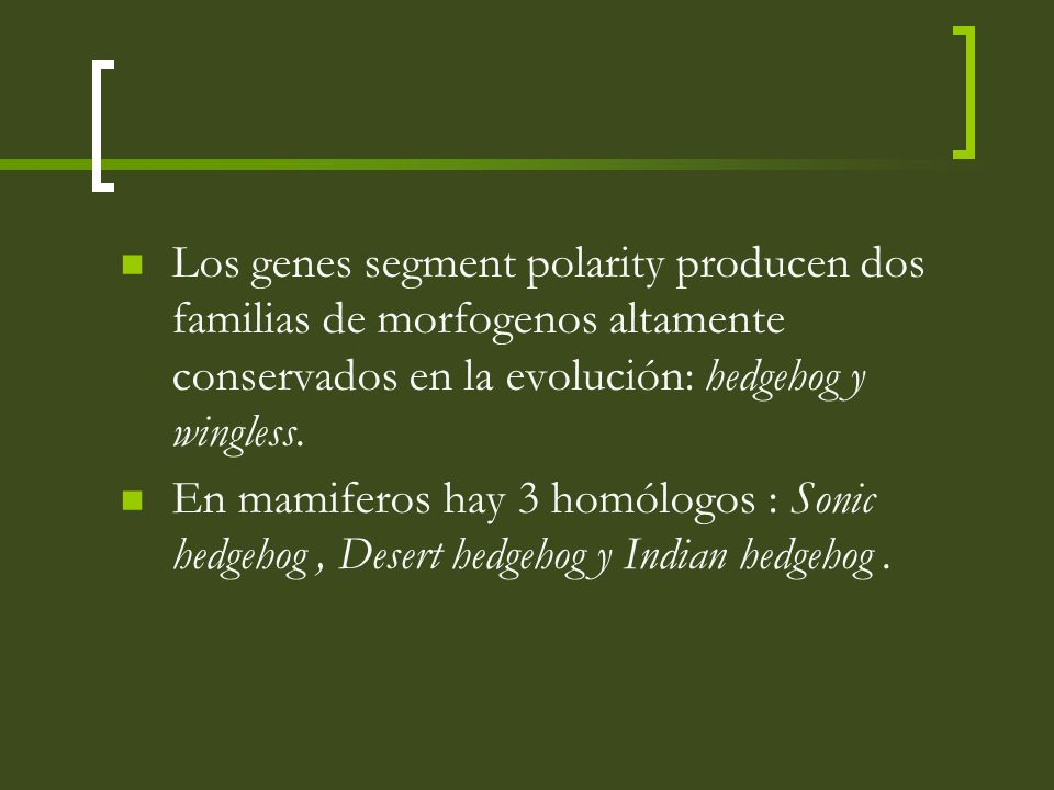 Los genes segment polarity producen dos familias de morfogenos altamente conservados en la evolución: hedgehog y wingless. En mamiferos hay 3 homólogo
