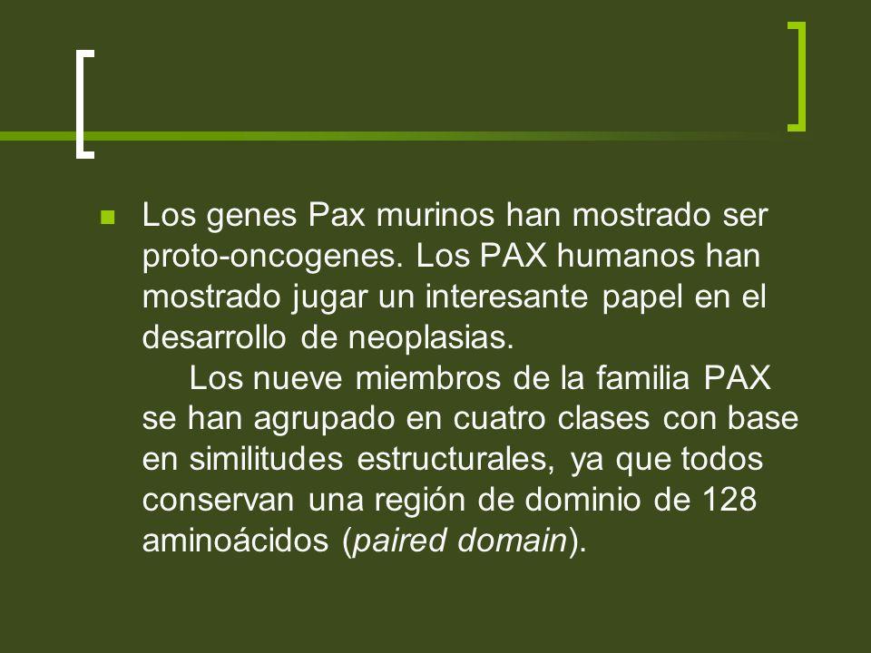 Los genes Pax murinos han mostrado ser proto-oncogenes. Los PAX humanos han mostrado jugar un interesante papel en el desarrollo de neoplasias. Los nu