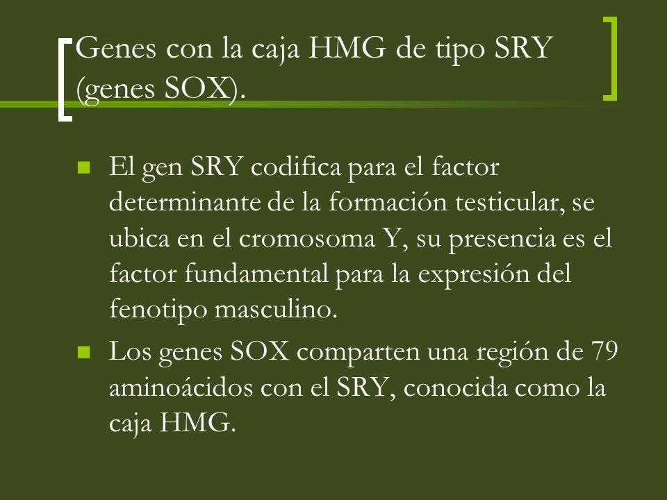 Genes con la caja HMG de tipo SRY (genes SOX). El gen SRY codifica para el factor determinante de la formación testicular, se ubica en el cromosoma Y,