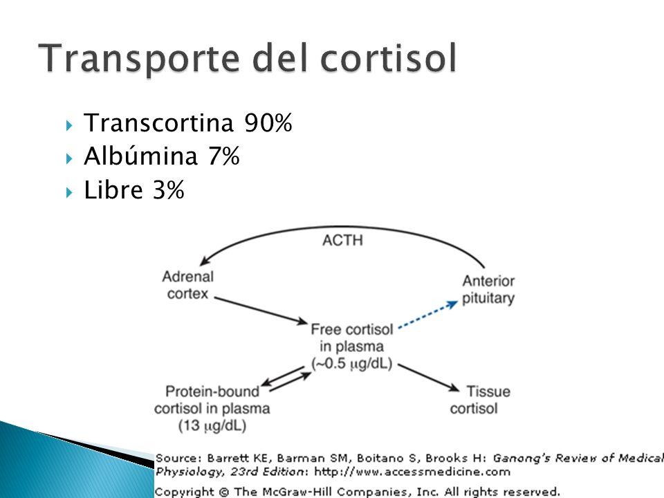 Proteína ligadora de corticosteroides (CBG) Glicoproteína de 383 aa con afinidad por el cortisol 30 veces mayor que por la aldosterona Sintetizada en el hígado