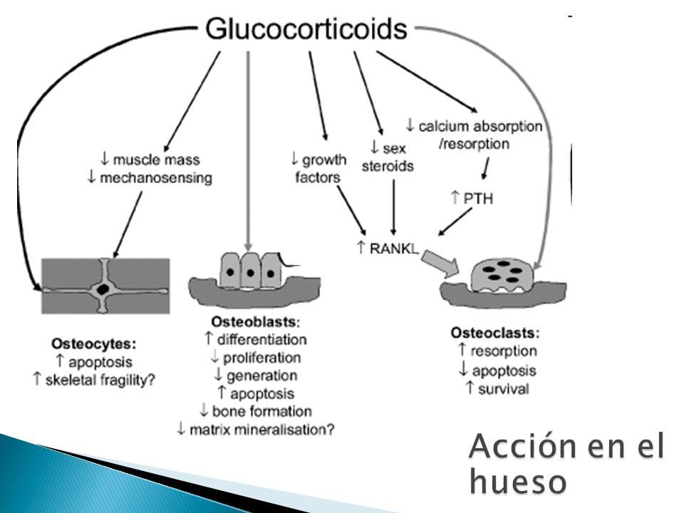 Cortisol Inhibe proliferación de fibroblastos y formación de colágeno