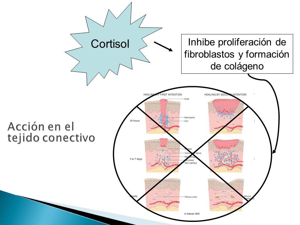Journal of Endocrinology (2008) 197, 1–10 Niveles cortisol Proteolísis Dolor Debilidad Hipokalemia Hiperpolariza la membrana, haciendo su estimulación más difícil