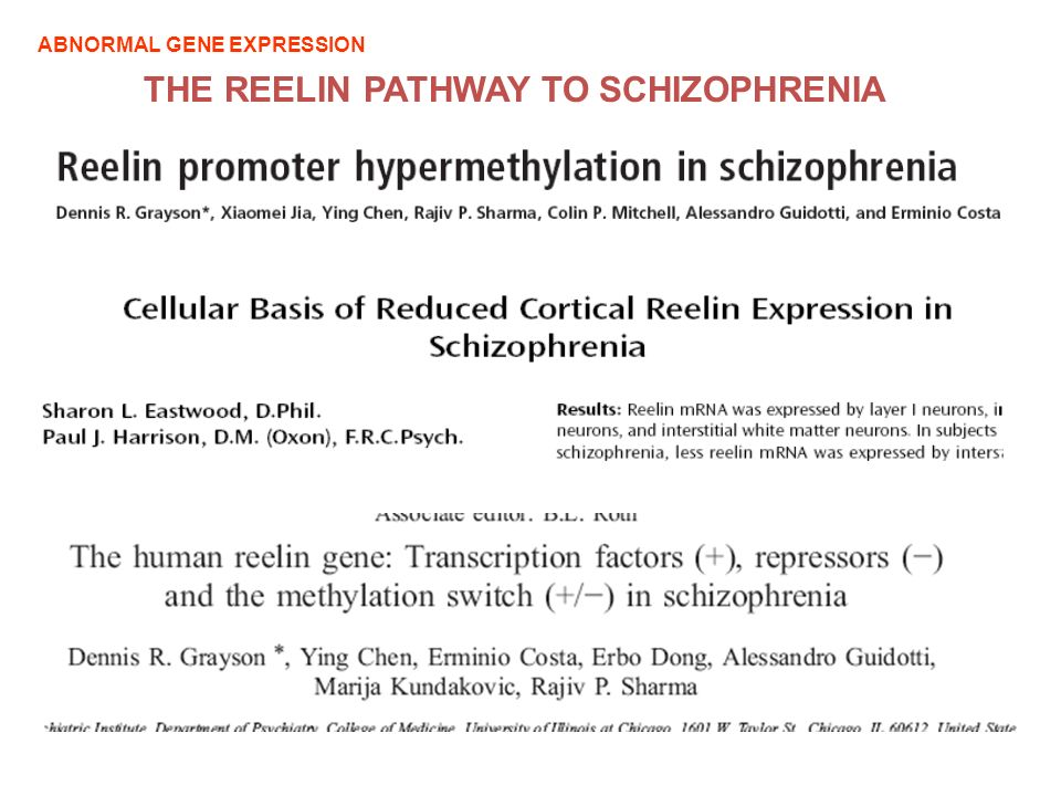 THE REELIN PATHWAY TO SCHIZOPHRENIA ABNORMAL GENE EXPRESSION