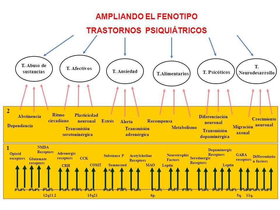 1 2 AMPLIANDO EL FENOTIPO TRASTORNOS PSIQUIÁTRICOS T. Neurodesarrollo T. Abuso de sustancias T. Afectivos T. Ansiedad T.Alimentarios T. Psicóticos Dop