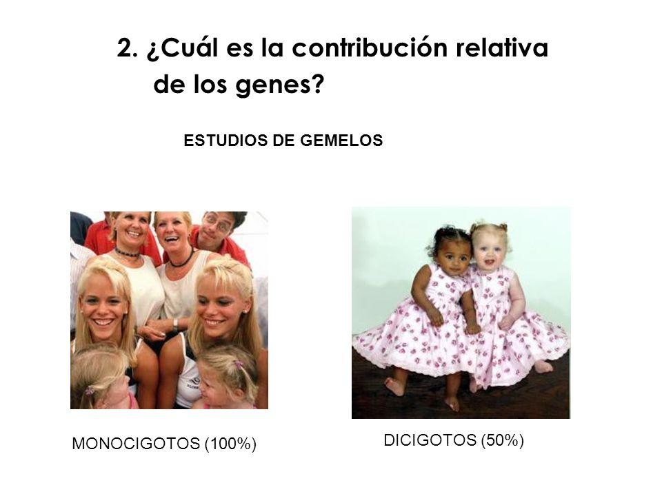 MONOCIGOTOS (100%) DICIGOTOS (50%) ESTUDIOS DE GEMELOS 2. ¿Cuál es la contribución relativa de los genes?