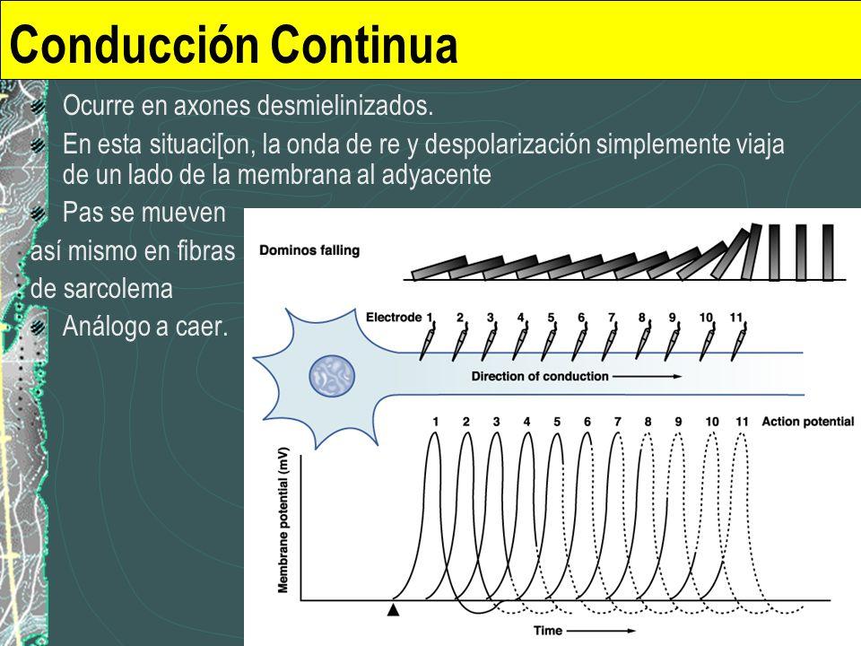 Conducción Continua Ocurre en axones desmielinizados. En esta situaci[on, la onda de re y despolarización simplemente viaja de un lado de la membrana