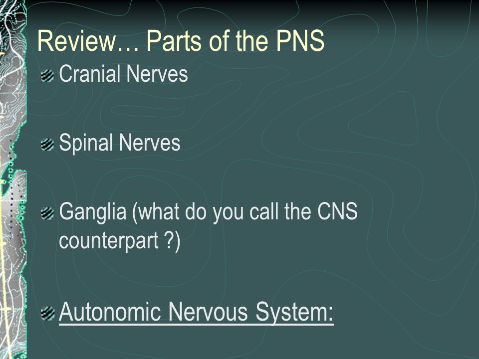 Review… Parts of the PNS Cranial Nerves Spinal Nerves Ganglia (what do you call the CNS counterpart ?) Autonomic Nervous System: