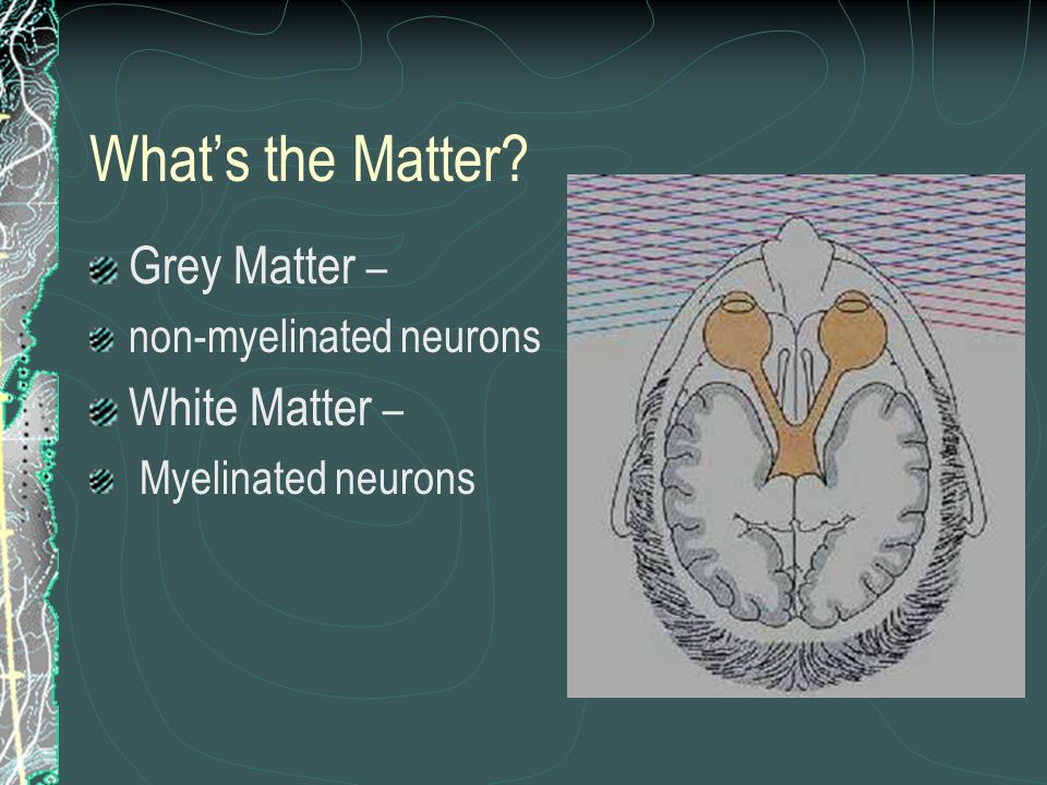 Whats the Matter? Grey Matter – non-myelinated neurons White Matter – Myelinated neurons