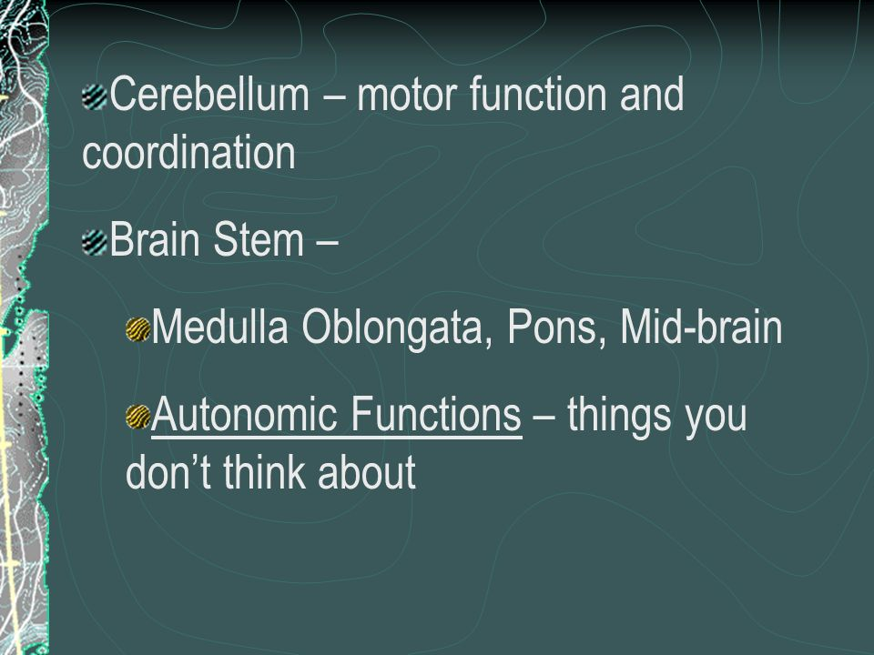 Cerebellum – motor function and coordination Brain Stem – Medulla Oblongata, Pons, Mid-brain Autonomic Functions – things you dont think about