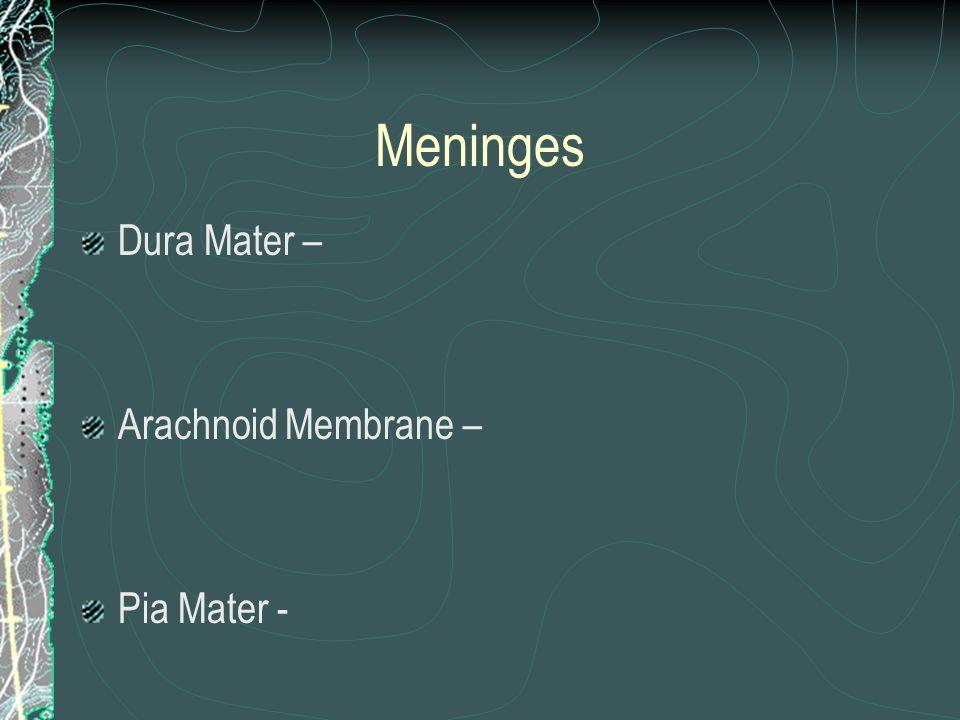 Meninges Dura Mater – Arachnoid Membrane – Pia Mater -