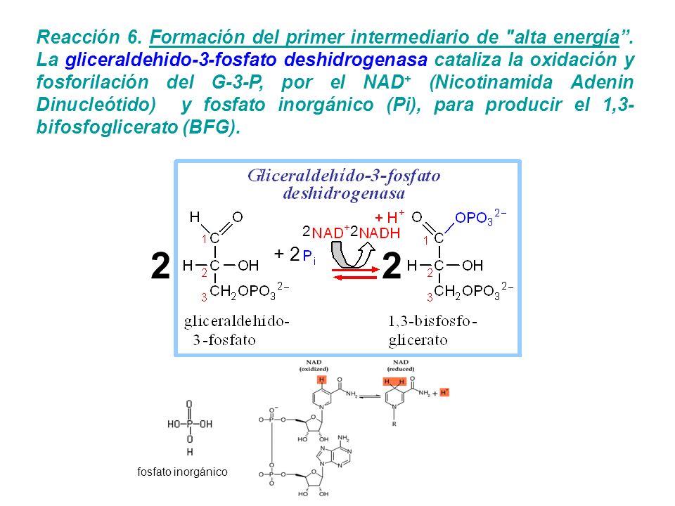 Reacción 6. Formación del primer intermediario de