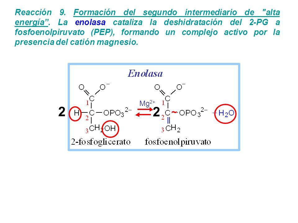 Reacción 9. Formación del segundo intermediario de