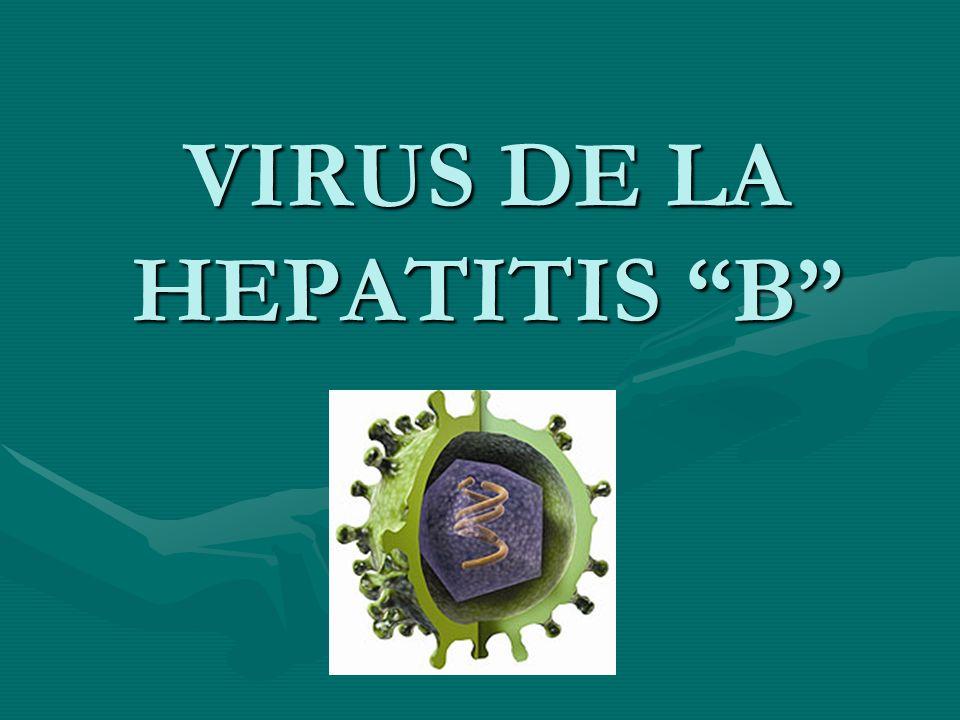 INTRODUCCIÓN El VHB es el principal representante de los hepadnavirus.El VHB es el principal representante de los hepadnavirus.