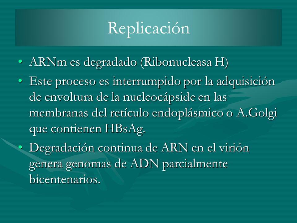 ARNm es degradado (Ribonucleasa H)ARNm es degradado (Ribonucleasa H) Este proceso es interrumpido por la adquisición de envoltura de la nucleocápside