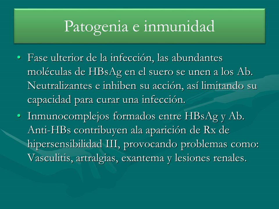 Fase ulterior de la infección, las abundantes moléculas de HBsAg en el suero se unen a los Ab. Neutralizantes e inhiben su acción, así limitando su ca