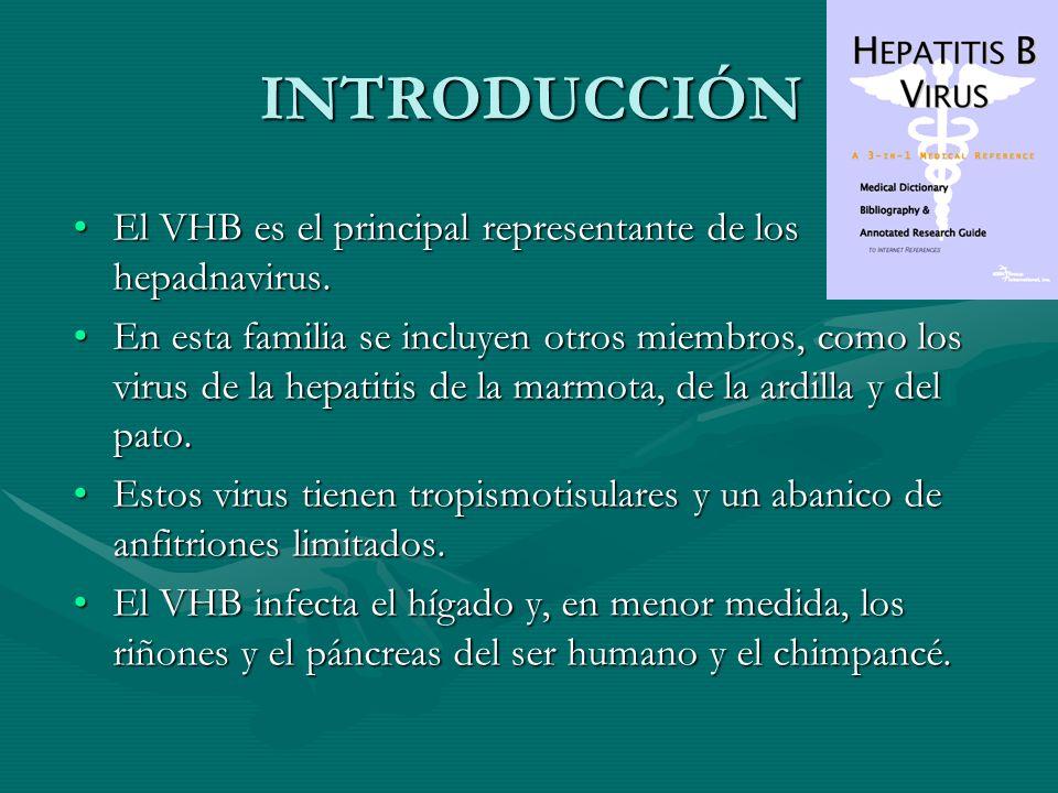 INTRODUCCIÓN El VHB es el principal representante de los hepadnavirus.El VHB es el principal representante de los hepadnavirus. En esta familia se inc