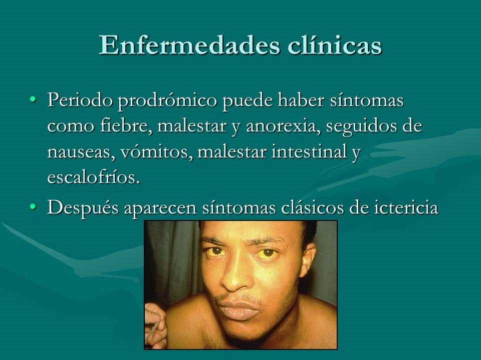 Enfermedades clínicas Periodo prodrómico puede haber síntomas como fiebre, malestar y anorexia, seguidos de nauseas, vómitos, malestar intestinal y es