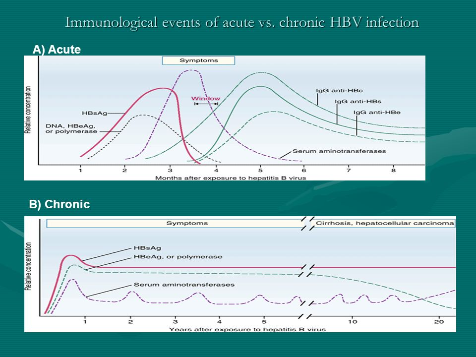Immunological events of acute vs. chronic HBV infection A) Acute B) Chronic From Engleberg, et. al., Schaechters Mechanisms of Microbial Disease, Four
