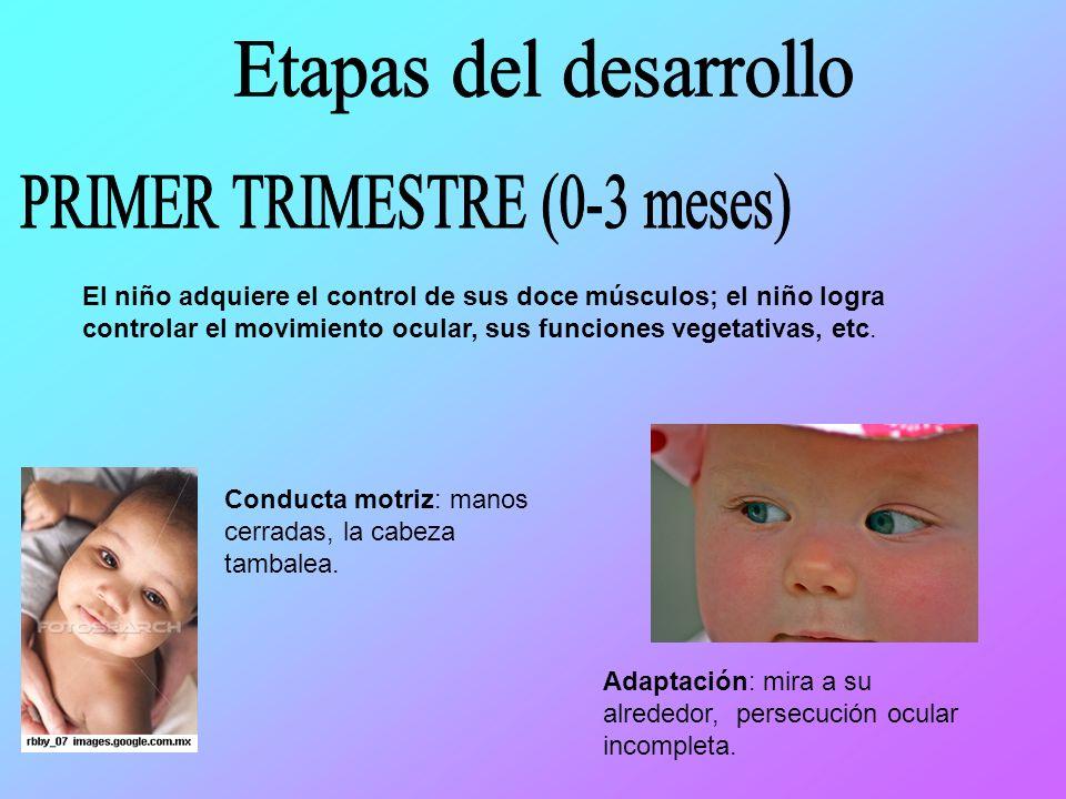 El niño adquiere el control de sus doce músculos; el niño logra controlar el movimiento ocular, sus funciones vegetativas, etc.