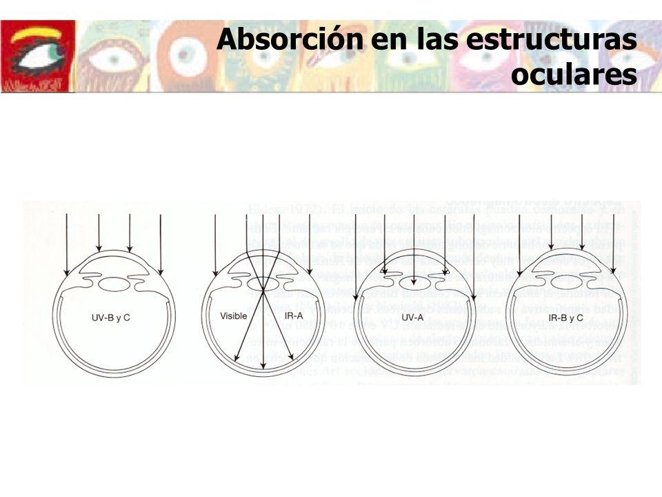 Absorción en las estructuras oculares