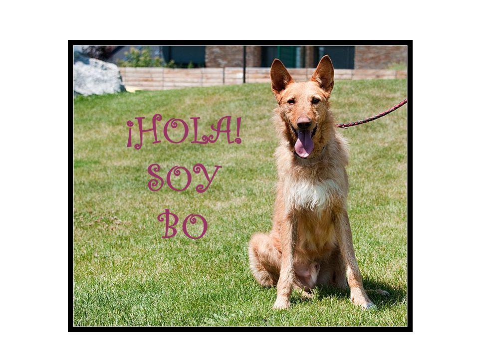 ¡HOLA! SOY BO