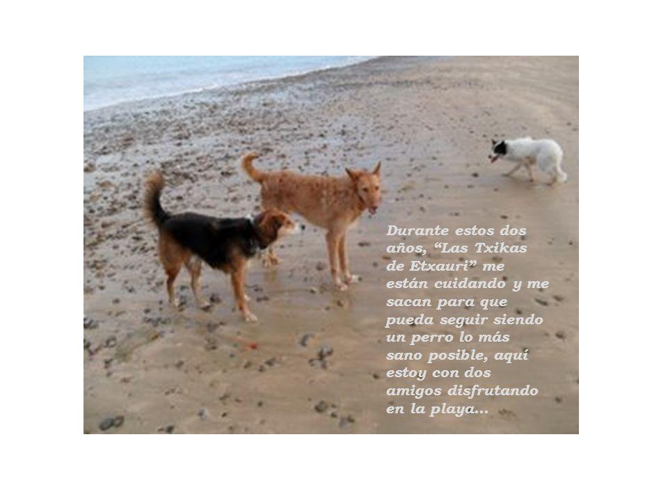 Durante estos dos años, Las Txikas de Etxauri me están cuidando y me sacan para que pueda seguir siendo un perro lo más sano posible, aquí estoy con d