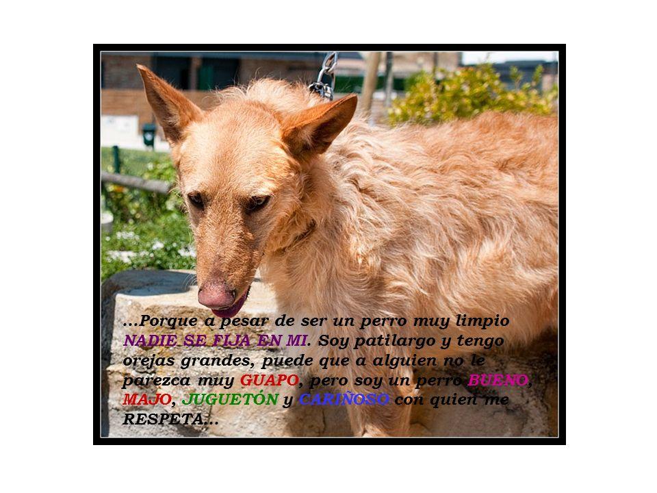 ...Porque a pesar de ser un perro muy limpio NADIE SE FIJA EN MI. Soy patilargo y tengo orejas grandes, puede que a alguien no le parezca muy GUAPO, p
