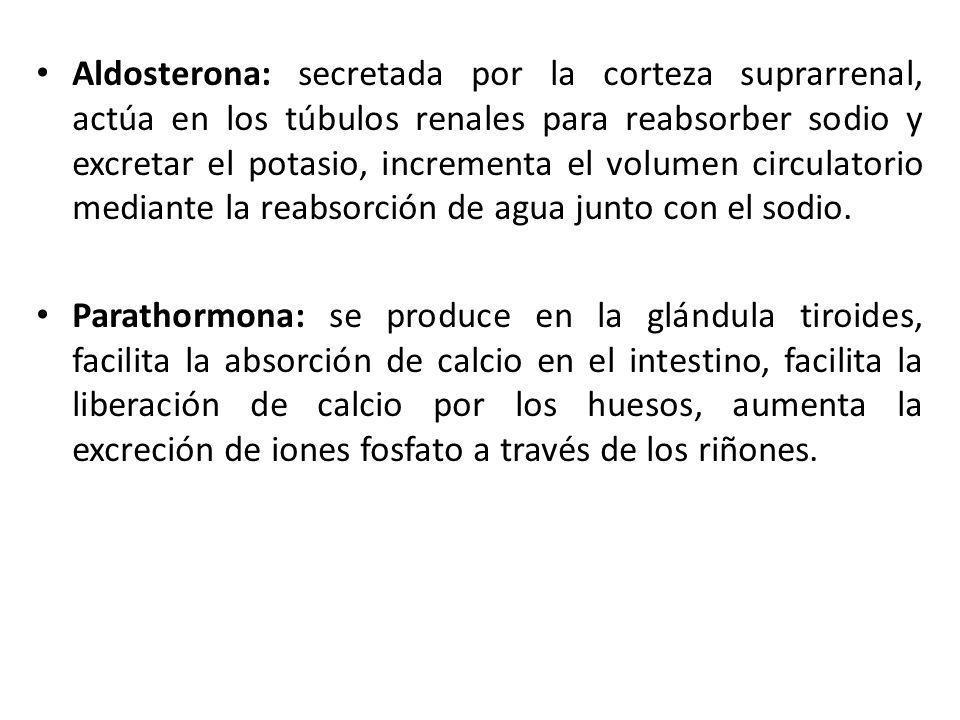 Aldosterona: secretada por la corteza suprarrenal, actúa en los túbulos renales para reabsorber sodio y excretar el potasio, incrementa el volumen cir