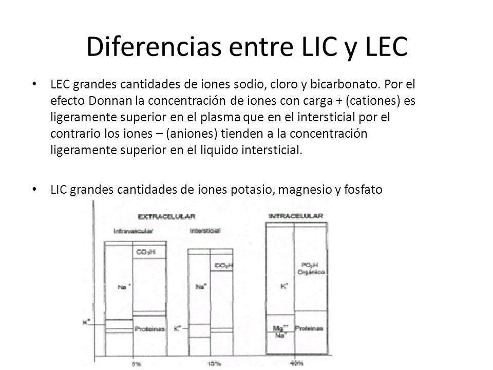 Diferencias entre LIC y LEC LEC grandes cantidades de iones sodio, cloro y bicarbonato. Por el efecto Donnan la concentración de iones con carga + (ca