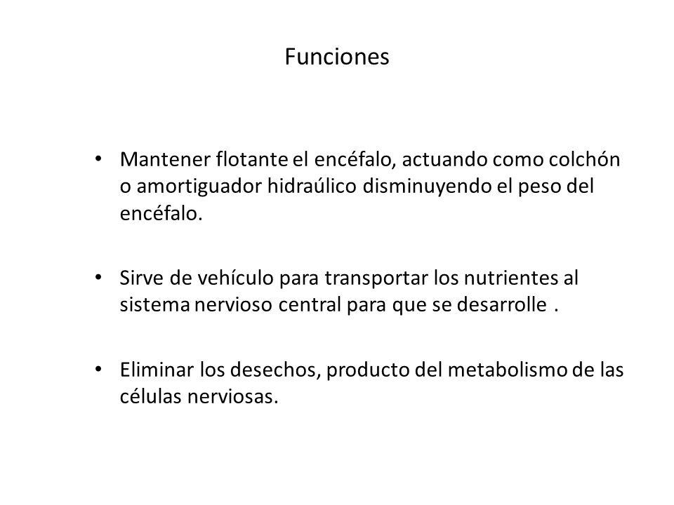 Funciones Mantener flotante el encéfalo, actuando como colchón o amortiguador hidraúlico disminuyendo el peso del encéfalo. Sirve de vehículo para tra