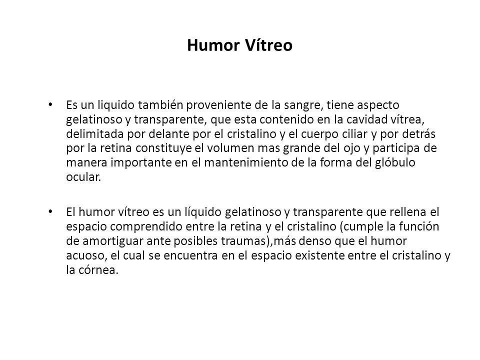 Humor Vítreo Es un liquido también proveniente de la sangre, tiene aspecto gelatinoso y transparente, que esta contenido en la cavidad vítrea, delimit