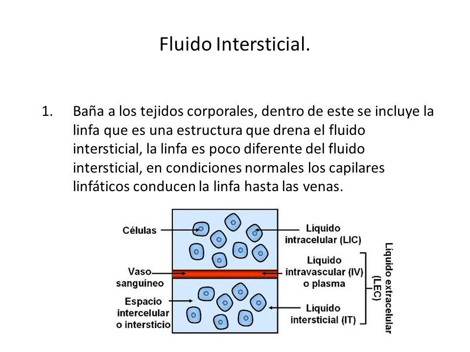 Fluido Intersticial. 1.Baña a los tejidos corporales, dentro de este se incluye la linfa que es una estructura que drena el fluido intersticial, la li