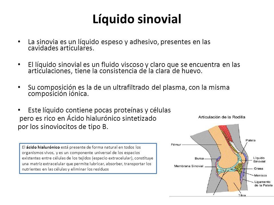Líquido sinovial La sinovia es un líquido espeso y adhesivo, presentes en las cavidades articulares. El líquido sinovial es un fluido viscoso y claro
