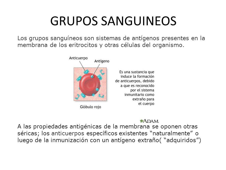 GRUPOS SANGUINEOS Los grupos sanguíneos son sistemas de antígenos presentes en la membrana de los eritrocitos y otras células del organismo. A las pro